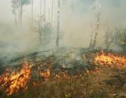 В Беларуси за несколько дней июля произошло более десятка лесных пожаров