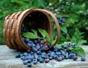 Около 4 тыс. граждан Украины воспользовались сезонными пунктами пропуска для сбора ягод в Беларуси