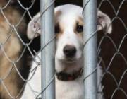 В Сморгони собака затащила под движущийся автомобиль восьмилетнего мальчика