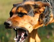 Бродячие собаки нападают на диких животных