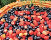Пинский лесхоз призывает граждан бережно собирать ягоды