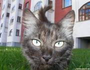 В Пинске заботятся о защите домашних животных, в Лунинце – нет
