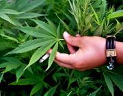 Только за неделю по Микашевичам - три уголовных дела за хранение наркотиков