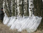 К заготовке берёзового сока приступили в Столинском лесхозе