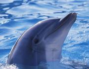 Увидеть дельфинов и оказаться в тёплом саду поможет отдел ФКСиТ   Столинского райисполкома