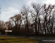 Гадить на головы отдыхающим в парке «Маньковичи» грачи больше не будут