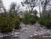 Почём и где можно будет купить новогоднюю ель в Пинске