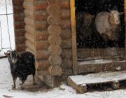 Содержать или раздать? Животным зооуголка Пинского парка нужна помощь
