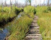 До 2021 года иностранцы будут платить за посещение «Ольманских болот»