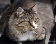 Как воруют витаминки для котов