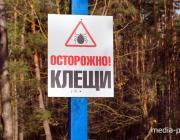 Лунинчане из леса приносят не только грибы