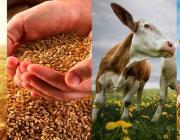 В Беларуси создадут первое агропромышленное производство полного цикла