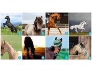 Выберите самую красивую лошадь: этот выбор расскажет о ваших ожиданиях от жизни