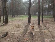 Как не потеряться в лесу. Интерактивный тест