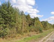 В Лунинецком районе  ходить в лес