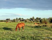 Металлолом продали, лошадь отпустили