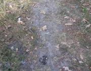Скелетированный труп нашли в лесу под Богдановкой