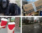 Убитая собака, ремонт дорог и домов, цены на кофе и посылки из Китая