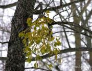 Парк «Маньковичи» очистили от птичьих гнезд