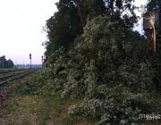 Во время бури поваленные деревья упали на пути в Лахве
