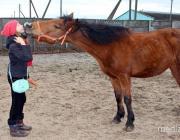 За долги судебные исполнители описали лошадей