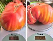 Лунинчанка вырастила помидор весом в килограмм