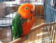 Попугаи «соберутся» в музее