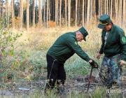 В Полесском лесхозе засадили молодыми растениями 90 га леса