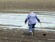 В СПК «Лопатино» посевы кукурузы спасают с помощью лопаты