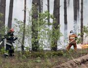 Полыхают «Ольманские болота». Огнём охвачено 400 гектаров