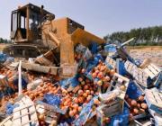 В России уничтожено 76 тонн продуктов, прибывших из Беларуси
