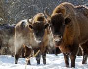 Беловежская пуща вошла в топ-25 лучших мест для путешествий в 2020 году от National Geographic