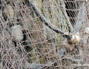 «Плавной» сетью длиной 72 метра браконьеры ловили рыбу на Припяти