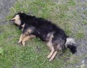Убил собаку. А наказание?