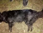 Нашлись ли виновные убитой домашней собаки?