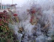 Сжигаете листву? Минприроды: это вредно для экологии и здоровья
