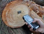 В Беларуси создадут электронную систему учета древесины