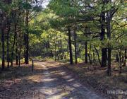 В Столинском районе введен запрет на посещение лесов