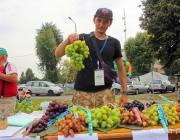 Грозди по 2,5 килограмма, ягоды размером со сливу