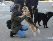 Тест: Что происходит с животными на Полесье