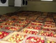 Россельхознадзор приедет в Беларусь проверять склады