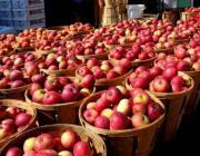 Беларусь сама обеспечит себя яблоками