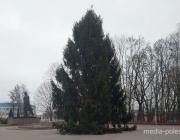 В Столине на площади установили новогоднюю ель. По традиции - живую
