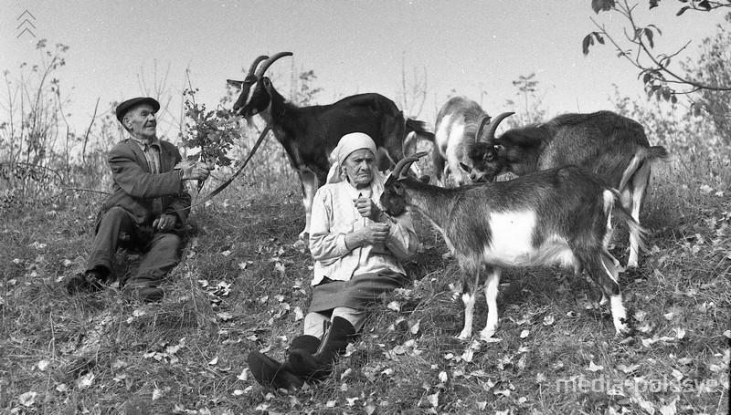 Дед Стахей с женой и козами