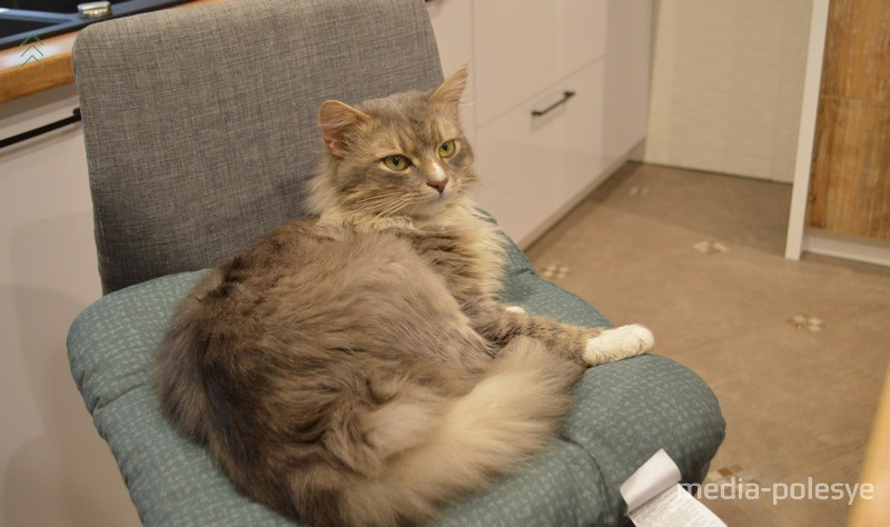 Теперь у семьи Колб остался один домашний питомец – кот Лео