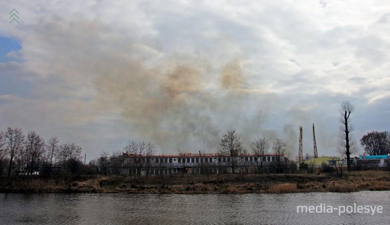 В бессмысленных пожарах гибнут растения и животные