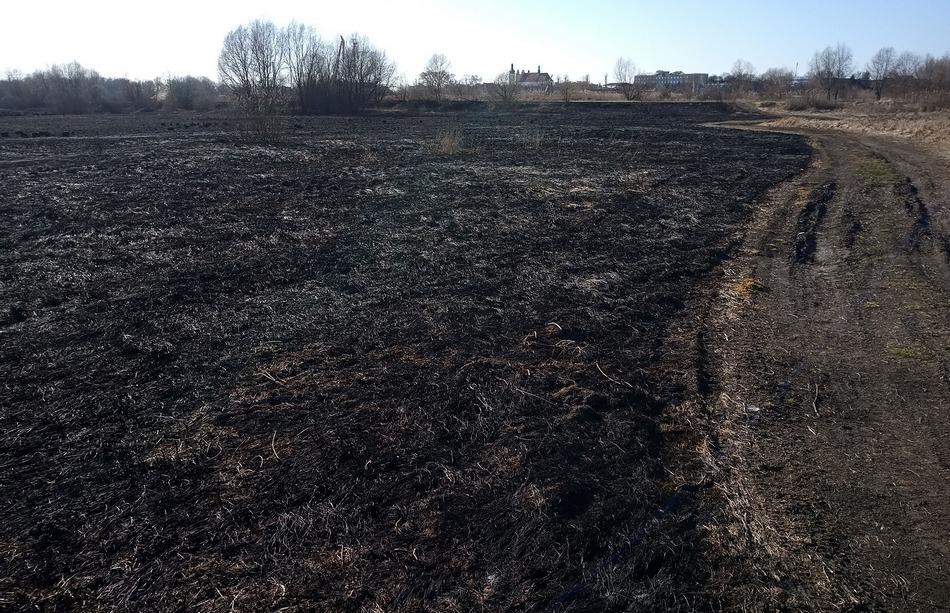 Гектары выжженной земли. Фото Павла Ляхновича