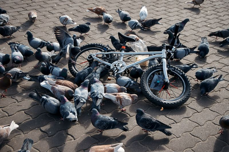 «Любовь и голуби» Автор Александр Горбацевич