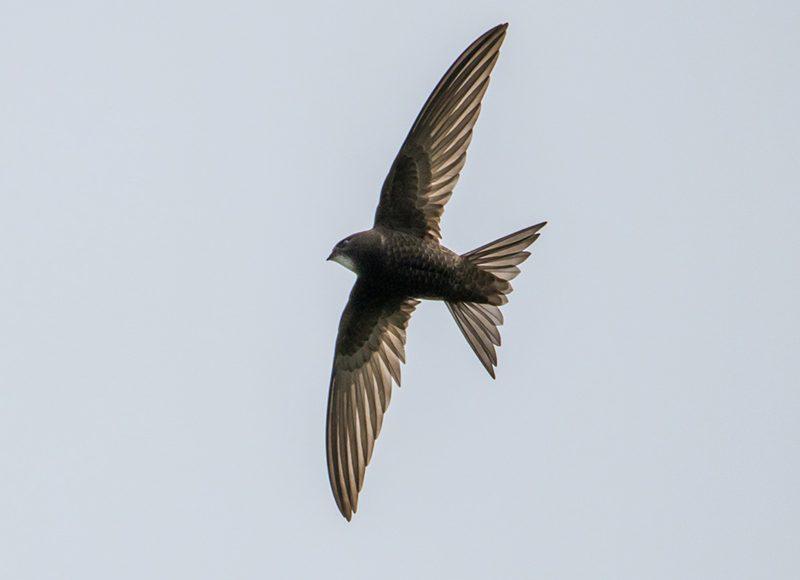 Фото Владимира Бондаря, birdwatch.by