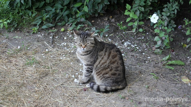 Кошка Маруся подкармливает Лёшу и пристально следила за происходящим